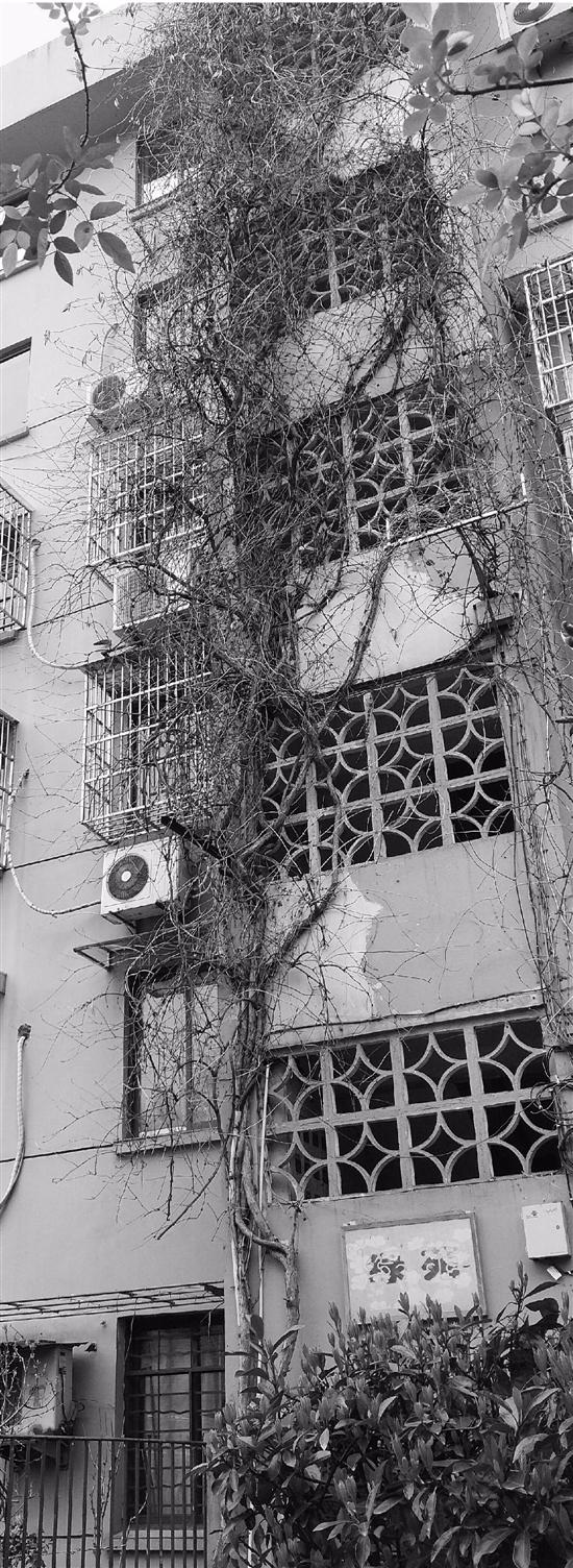 杭州一幢住满老人的老房子 装电梯卡在社区公章上